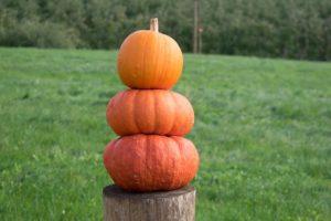 pumpkins-504122_640